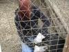 Arbeitsbedingung: Drahtarbeiten samt Hund auf dem Schoss