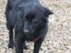 Dieses süße Hundemädel hat ein Zuhause in Wien gefunden