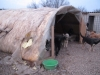 Zelt für das Kleinrudel - das Wetter und die Hunde nagen dran