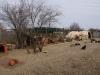 ...auch das 2.Zelt ist mitgenommen durch Witterung und Hunde...