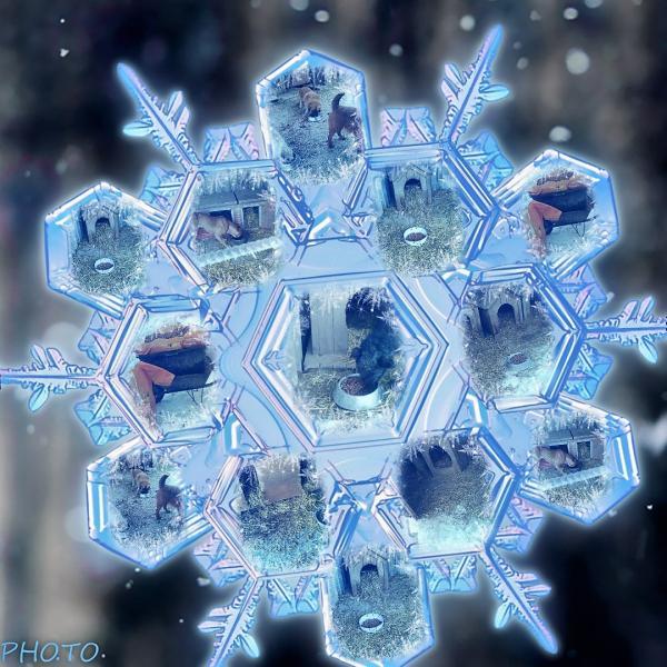 funny.pho.to_magic_snowflake